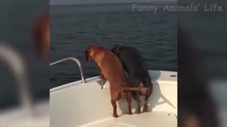 Dogs want to jump into the water