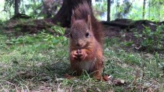 Good Morning! Baby Squirrel Enjoys Breakfast