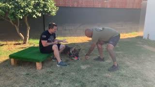 Bark On Your Command Dog Training