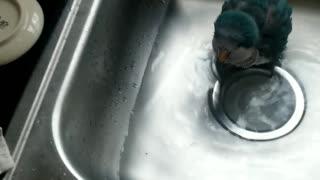 Cute laughing parrot taking bath