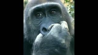 monkey funny sweet