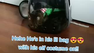 Cat Bubble bag