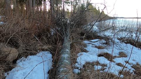 Nordic Nature Treat #7