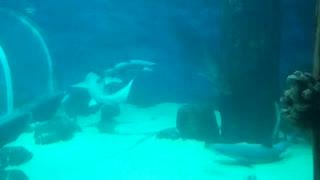 killer sharks in the aquarium