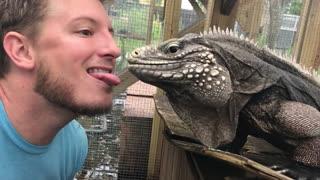 Feeding Giant Iguana from Your Tongue