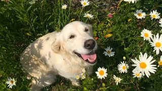 Most POPULAR Dog Breeds in the World