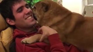 Dog can't stop kissing owner