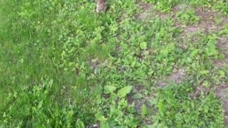 Bunnies hopping