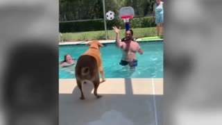 Amazing Dog Shoots a 3 point shot