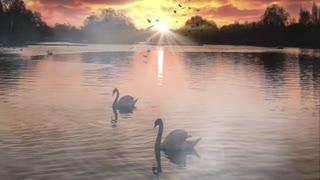 Swan 🦢 Lake