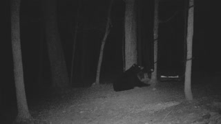 The Woods - 02/03/2021 Bear