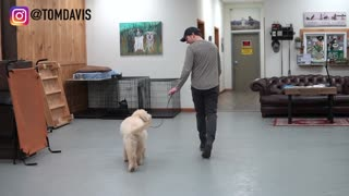 Teach your dog to walk