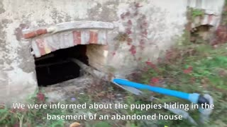 7 Puppies Hide from People after Their Mom was Poisoned
