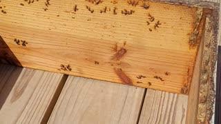 Splitting bees