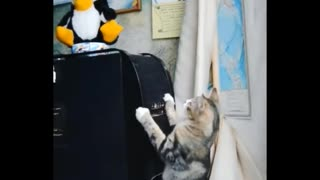 Daily cat video - 6