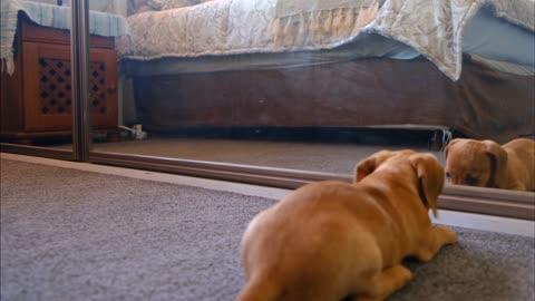 Dog InThe Mirror.