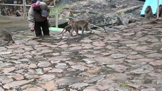 feeding nuts to Monkey
