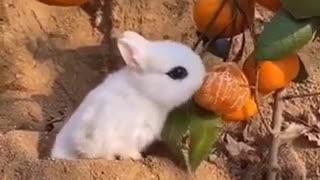 Lovely rabbit na