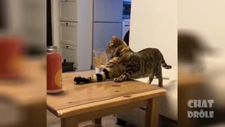 a funny cat drinks water