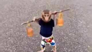 lovely walking monkey