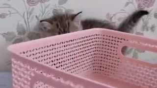 Adorable little cat behind the basket
