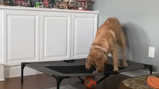 Doggy Squeaks Ball from Trampoline