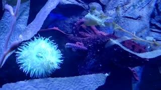 Color change octopus
