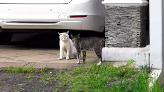 Two Cats Fighting With Each Other