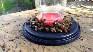 Feeding bee's