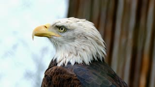 I looked at the eagle