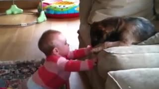 baby playing with border terrier puppy