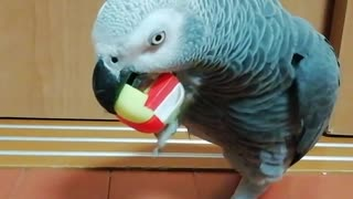 Parrots are good at assembly puzzles