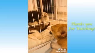 Cute baby Pets And Funny Animals Compilation.