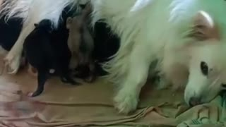 puppies having their breakfast