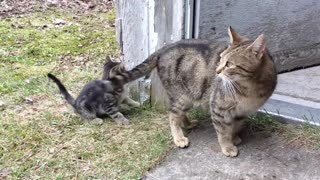 Kitten get punished after chasing mommy tail😂