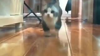 Run, it's food time