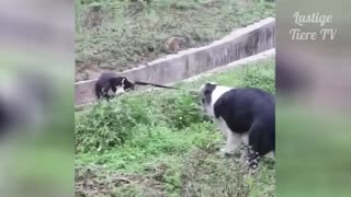Best Funny Cats and Dogs Compilation 2019