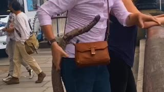 Prank people with a fake snake