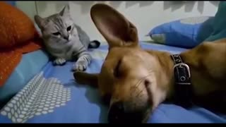Funny Animals Farting