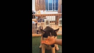 Funny and Hilarious dogs reaction