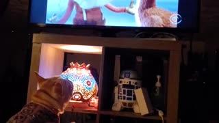 Little Bulldog wants a piece of Rudolph