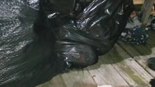 Guy Guards Garbage From Bear