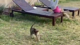 Little kitty runs wild
