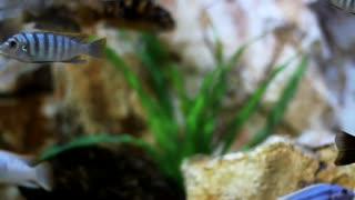 See colorful aquarium fish. Really beautiful