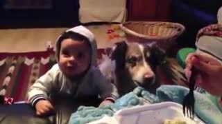 Watch the dog begging to be fed