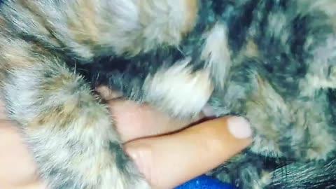 Catcat ply