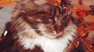 Happy halloween kitty