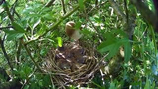 Nature and Wildlife ♦ BEAUTIFUL ANIMALS and BIRDS