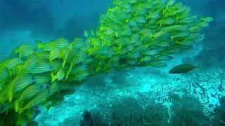 beautiful fish 0