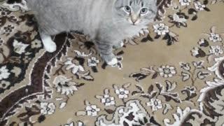 Interesting cat, very much waiting)